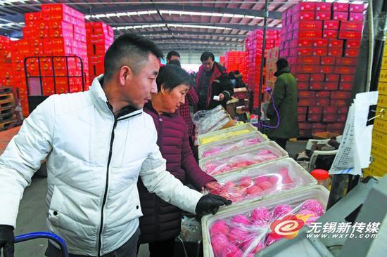 昨天,市民在朝阳水果批发市场选购水果。临近春节,水果销售进入旺季,市民纷纷前来购买合适果品为过年做准备。 (刘芳辉 摄)