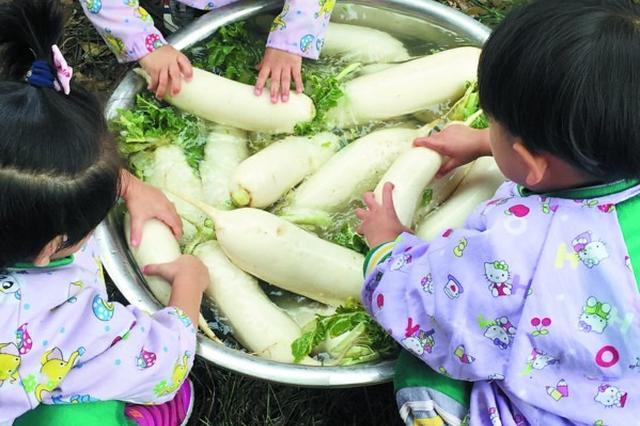 """石塘湾幼儿农场""""全收获"""" 体验种植的乐趣"""