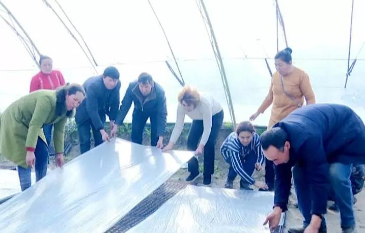 农业技术员手把手教育苗,帕提木种蔬菜有信心