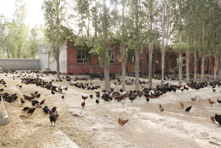 阿合奇县:技术+分红,工作队助农脱贫有妙招