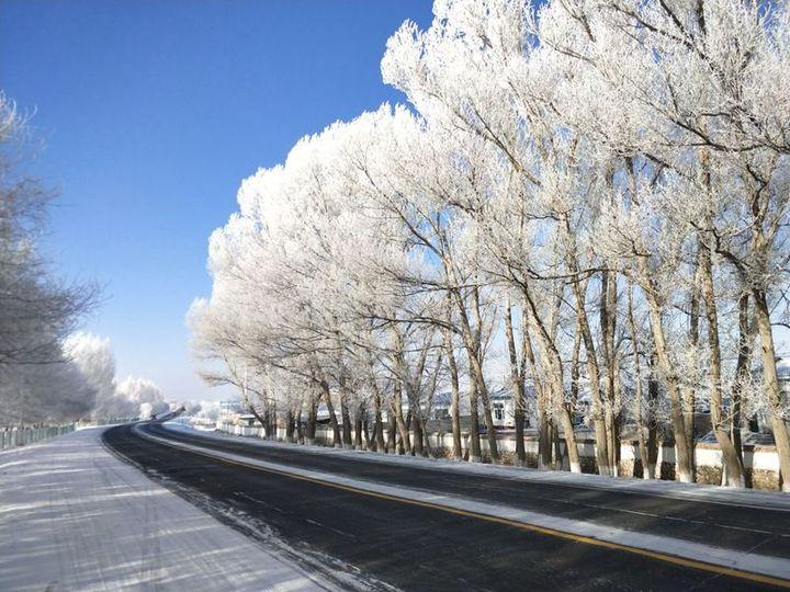 玉树琼花!来新疆看雾凇,给你一个童话世界