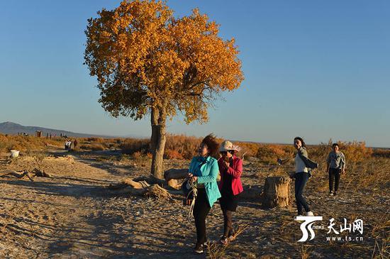 游客在胡杨林里游玩。