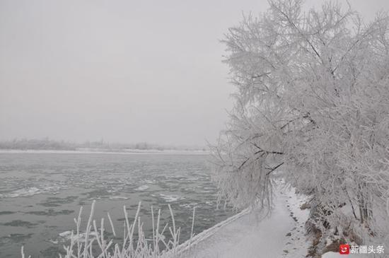 2018年12月30日,雪后伊犁河雾凇美如画。(刘秀峰 孙乐 供图)