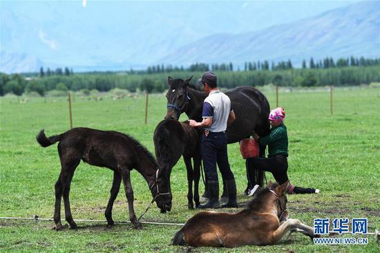 5月24日,牧民在新疆新源县那拉提镇阿尔善村挤马奶。新华社记者沙达提摄
