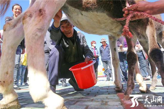 6月15日,巴里坤哈萨克自治县头道河子村锦鸡儿花海草原湿地景区挤驴奶比赛。