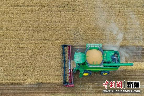 7月9日,联合收割机在新疆巴音郭楞蒙古自治州尉犁县兴平镇达西村收割春小麦。