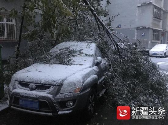 被厚雪压断了的树枝。