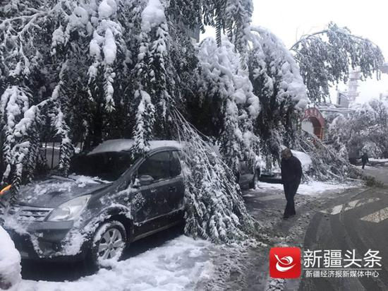 一场厚厚的初雪压弯了还未落叶树枝,整个世界一片洁白。