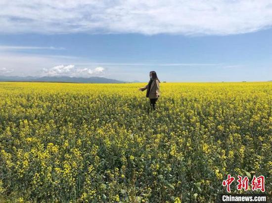 新疆百万亩油菜花绽放迎客 游人沉醉花海