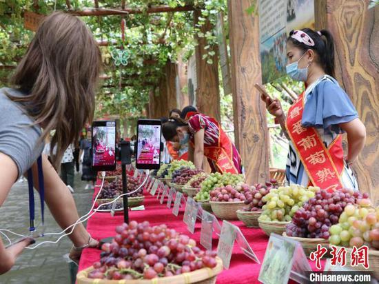 新疆吐鲁番展出百余种葡萄引客来 社企对接助农发展