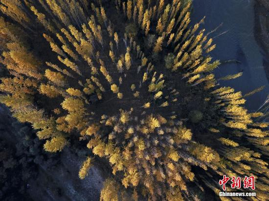 新疆博州:博尔塔拉河谷层林尽染