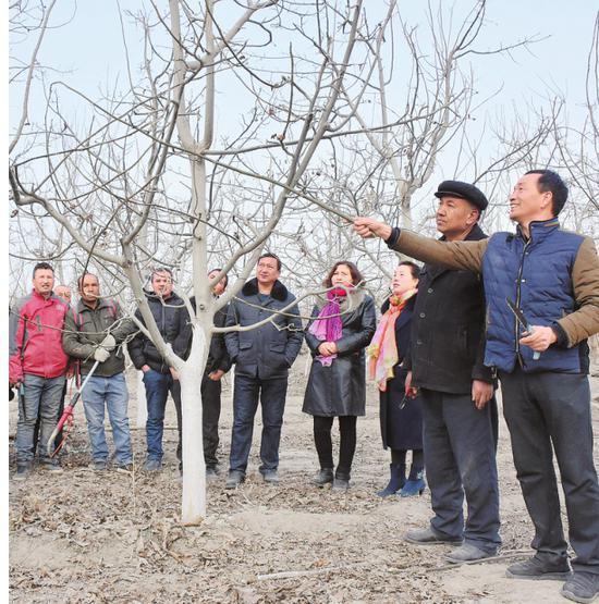 3月10日,莫合塔尔(右二)和赵武忠(右一)向温宿县柯柯牙镇英沿村村民传授果树修剪技术。