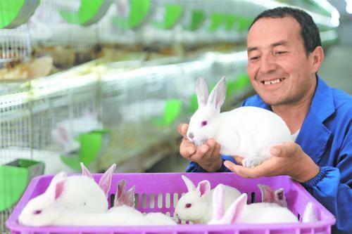 6月5日,托合提麦麦提看到即将运走的小兔子,对未来充满信心。
