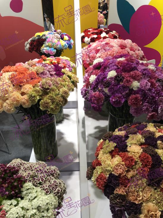 新手如何开花店:流星花园花卉带你走向财富高地