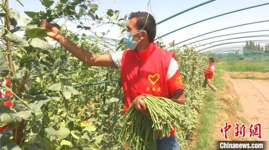 """新疆喀什市的志愿者服务队帮助农户""""抗疫""""不误农事。 艾孜海尔 摄"""