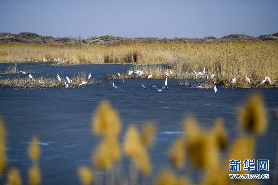 3月28日,水鸟在乌伦古湖国家级湿地公园栖息。新华社记者 赵戈 摄