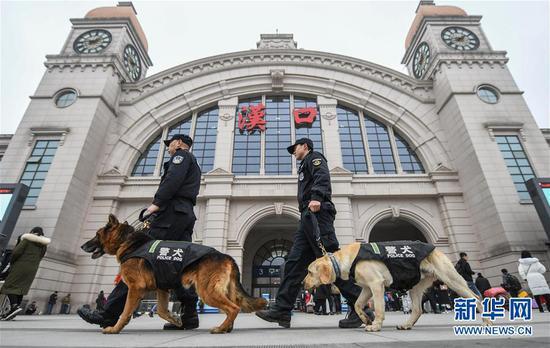 """1月15日,训导员带着警犬""""皮特""""(右)和""""哼哼""""在汉口火车站熟悉春运执勤场地。武汉铁路公安处警犬大队的警犬""""皮特"""",是一只出生于2018年3月的拉布拉多搜爆犬。它在训导员丁岩十个月的训导下,将在今年春运期间,与一只服役近十年、即将退役的老德牧警犬""""哼哼""""搭档上岗,为旅客出行提供安全保障。新华社记者 程敏 摄"""