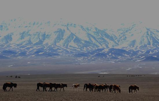 新疆裕民县:巴尔鲁克山初春