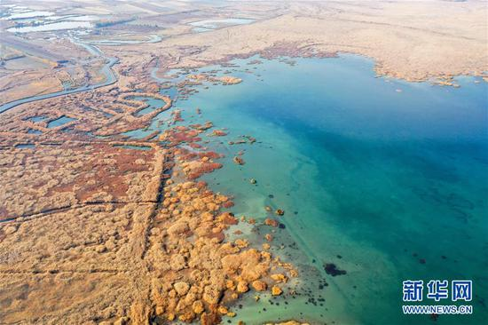 110月18日拍摄的玛纳斯国家湿地公园一景(无人机照片)。 新华社记者 丁磊 摄