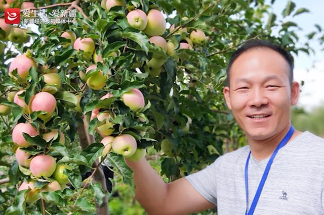 塔城市:欢迎来园艺村品尝香甜的苹果