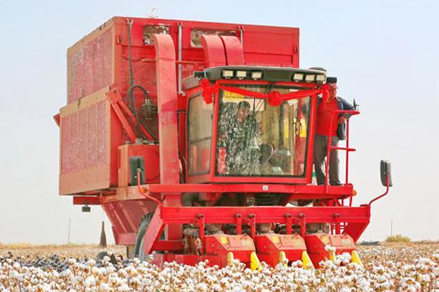 新疆维吾尔自治区库车县55万亩机采棉开收(图)