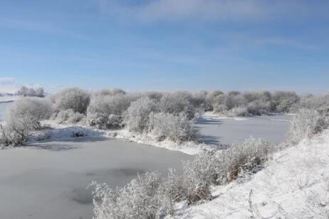 寒潮来袭 特克斯河现雾凇,若隐若现如仙境