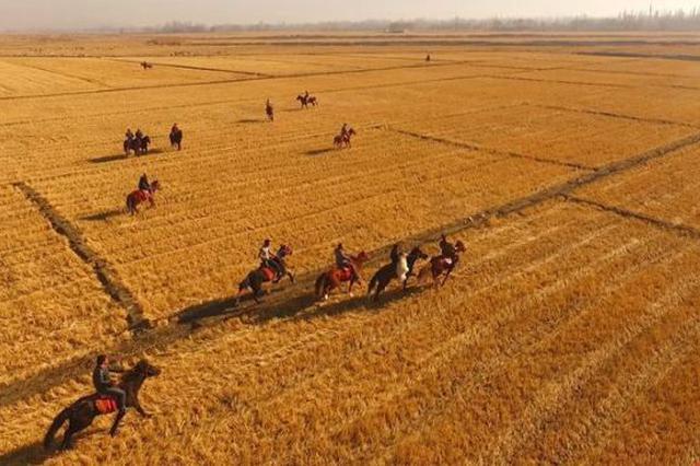 乌什县:赛马和叼羊比赛  勇敢者的运动!