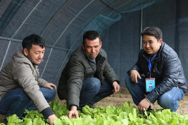 且末县:小小蔬菜拱棚助力村民增收致富