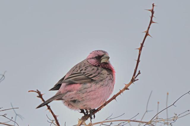 新疆六旬鸟友一年拍摄337种鸟 见证新疆生态之美