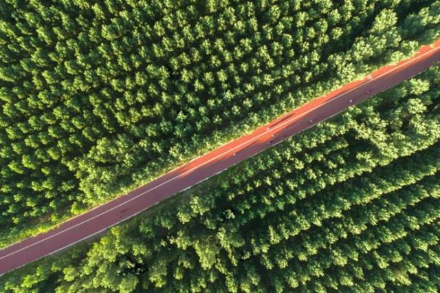 新疆三北工程经济林成为当地农牧民收入重要来源