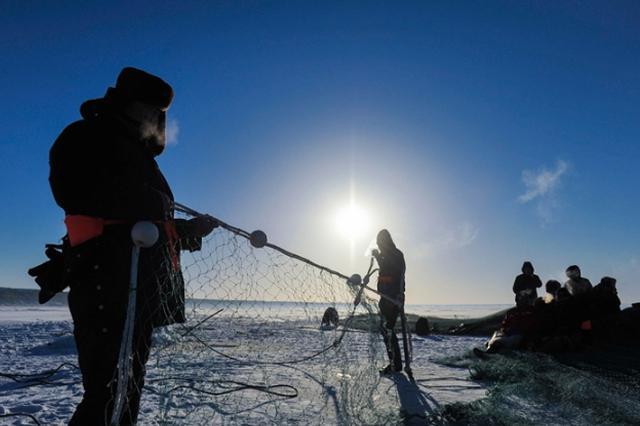 福海乌伦古湖捕鱼团队完成破冰下网 今日一起见证出鱼现场