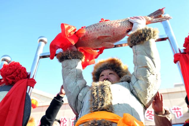 18.8公斤!乌伦古湖冬捕节头鱼个头真不小