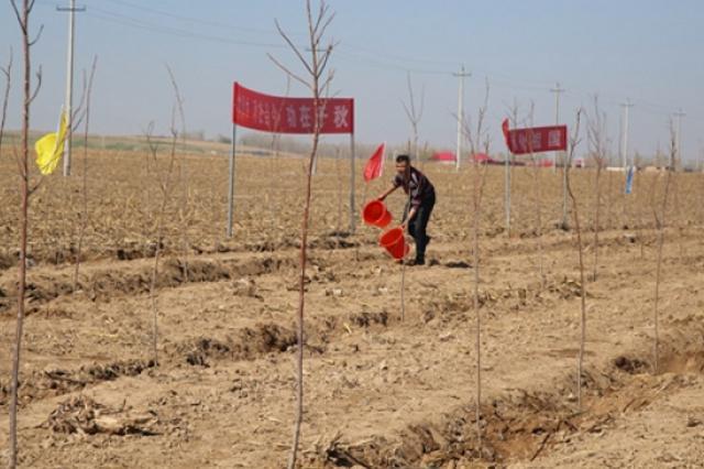 春回大地添新绿——新疆各地开展植树造林活动