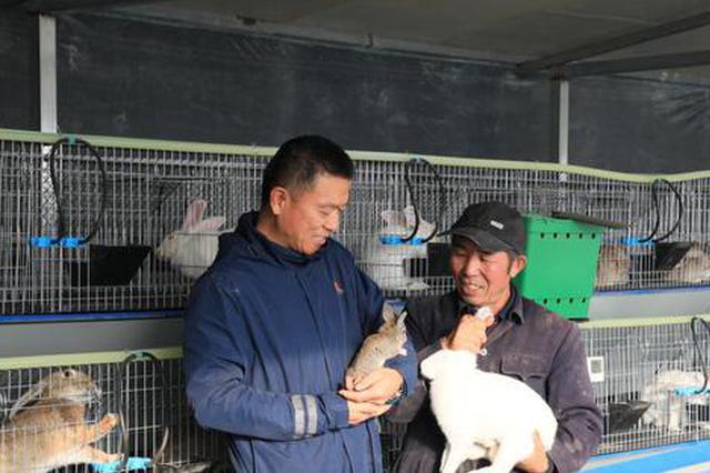 和硕县:养殖肉兔走增收致富路