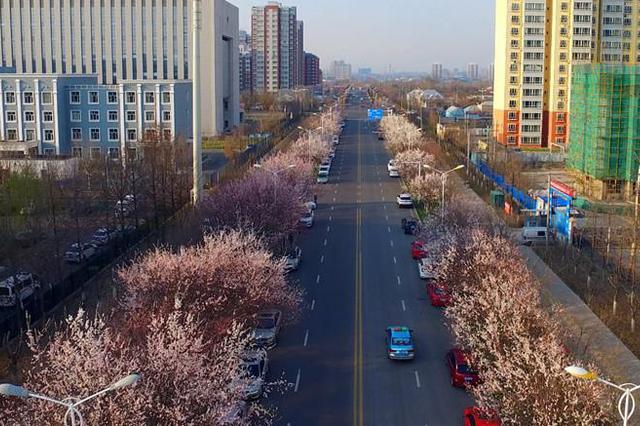 伊宁市:花开春满园