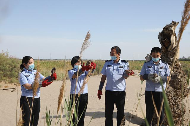新疆库车森林公安救助国家二级保护动物红隼