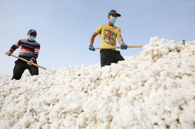 新疆库车市结果他:家门口的棉花厂 棉农增收有保障