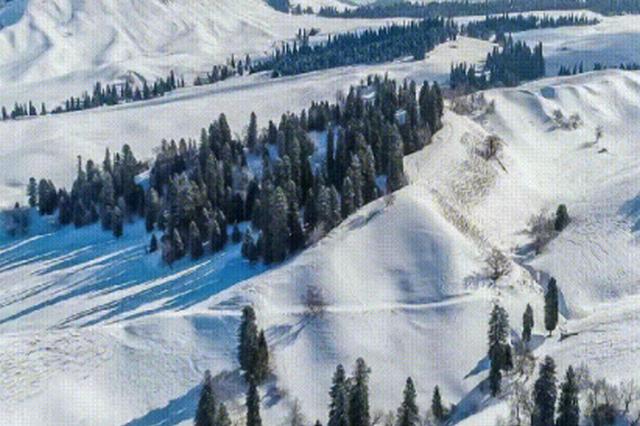 新疆新源现林海雪原奇观