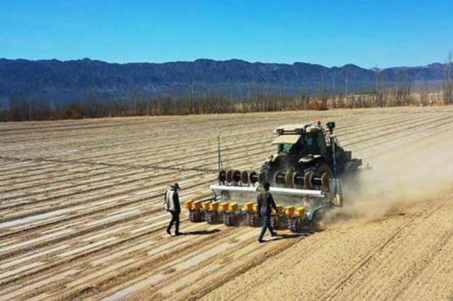 新疆托克逊县7万余亩棉花全面开播