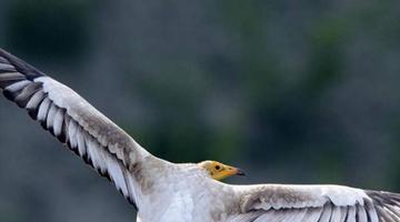 新疆鸟友发现三个鸟类新记录