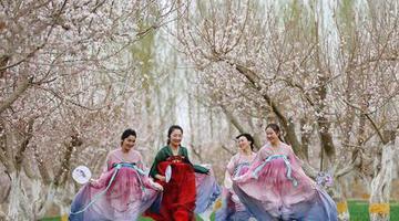 新疆巴州轮台的春天 有花有诗有远方……