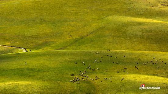 天山牧场2