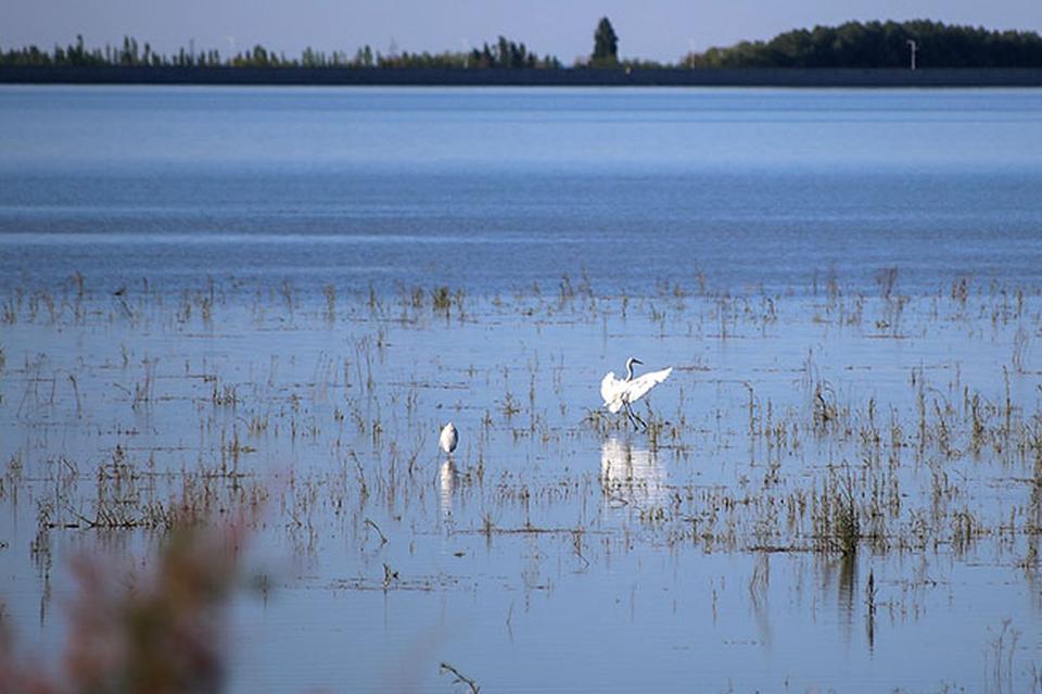 白鹭苍鹭飞、黑鹳灰鹤舞:呼图壁湿地成鸟的天堂