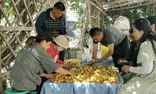 聚焦未摘帽县农产品销售  助力英吉沙县杏农丰产增收