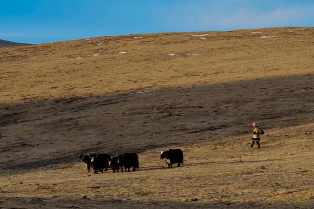中国减贫密码 | 一位老牧民的新牧场