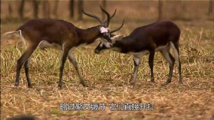 囧哥:乡土气息!范冰冰邓超领金鸡奖背景真不是P的吗图片