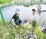 水浸田变身花海生态菜广泛种植
