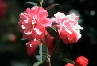 视频:美在春城 幸福昆明