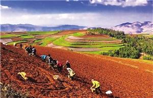 春到彩云南,農人不等閑——云南全力穩定糧食生產