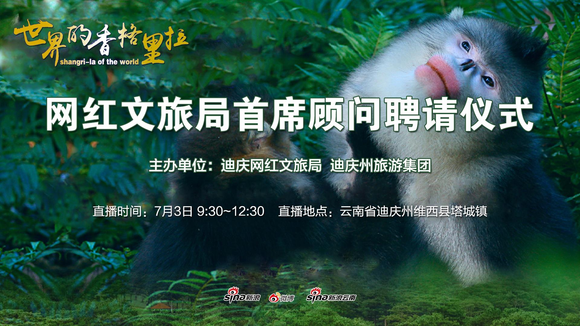直播:约会滇金丝猴——与迪庆萌新IP见面